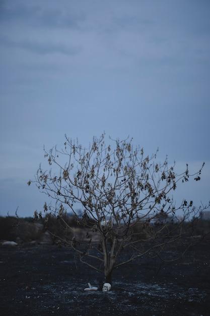 Lang schot van een de herfstboom met hekserijelementen Gratis Foto