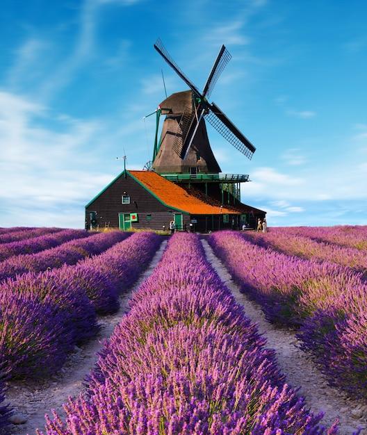 Lavendel bloem bloeiende geurende velden Premium Foto