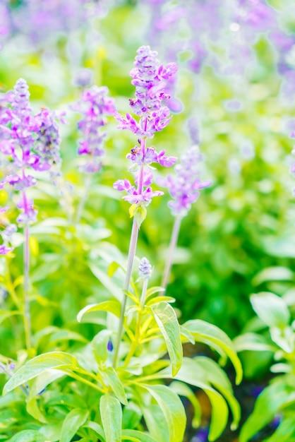 Lavendel bloem Gratis Foto