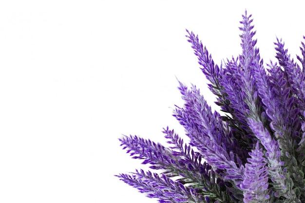Lavendelinstallatie op witte achtergrond wordt geïsoleerd die Premium Foto