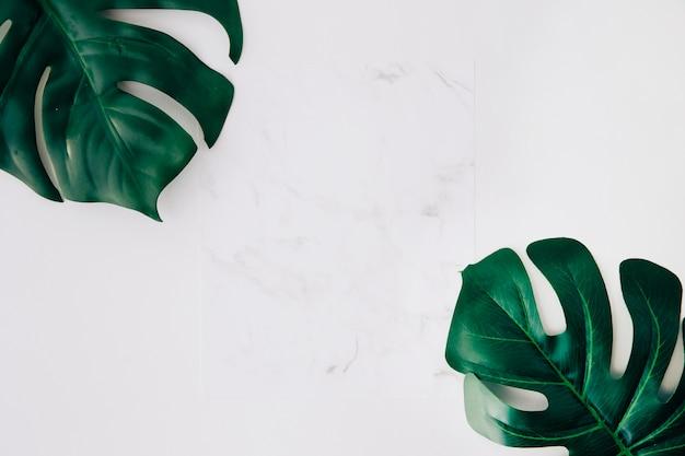 Leeg witboek en groene monsterabladeren op witte achtergrond Gratis Foto