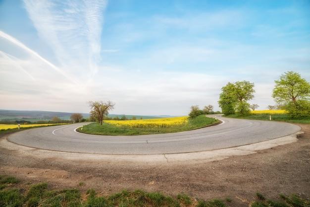 Lege asfaltweg en bloemengebied van gele bloemen Premium Foto