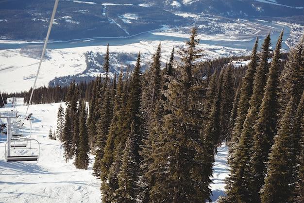 Lege skilift en pijnboom in het skigebied Gratis Foto