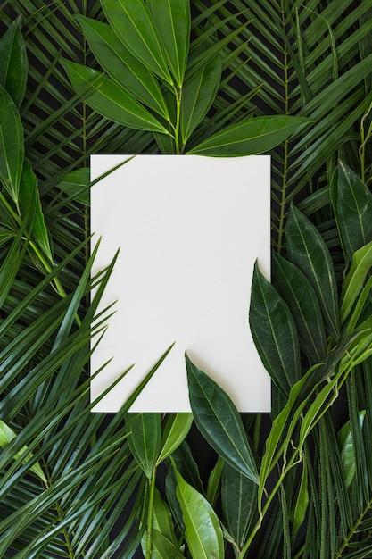 Lege witte pagina met groene bladeren Gratis Foto