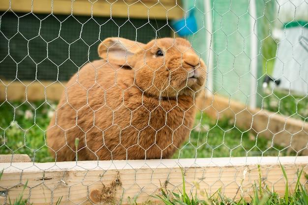 Leuk binnenlands harig konijn in een kooi overdag Gratis Foto