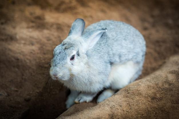 Leuk grijs konijn op de grond Premium Foto