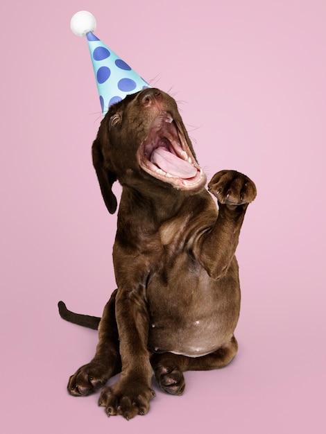 Leuk labradorpuppy die een partijhoed dragen Gratis Foto