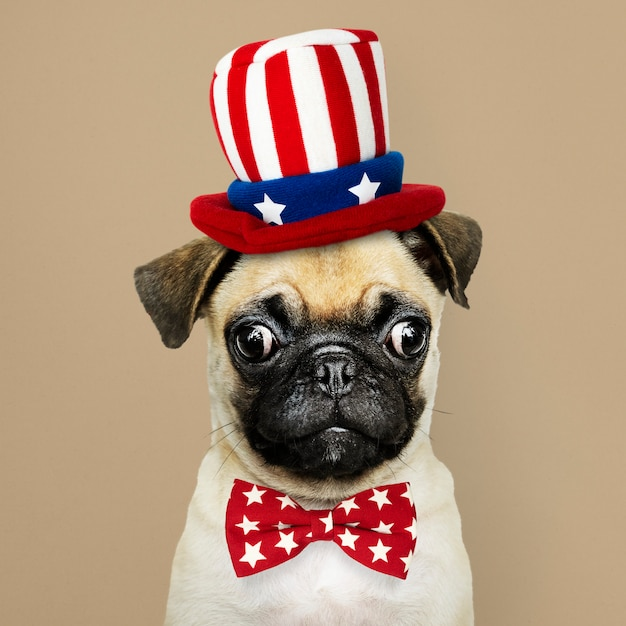 Leuk pug puppy in een hoed van uncle sam en een vlinderdas Premium Foto