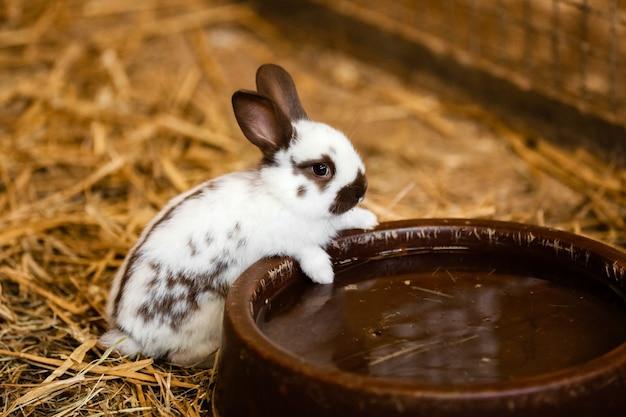 Hungry Bunny-beelden | Gratis vectoren, stockfoto's & PSD's