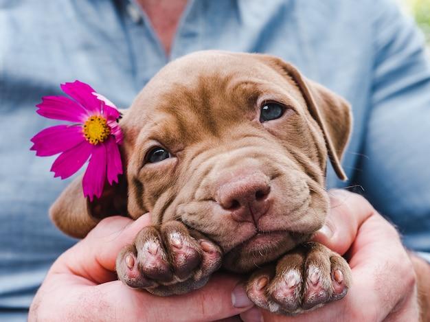 Leuke, charmante puppy en een heldere bloem Premium Foto