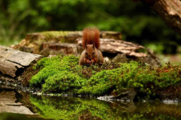Leuke eekhoorn die voedsel in een bos zoekt Gratis Foto