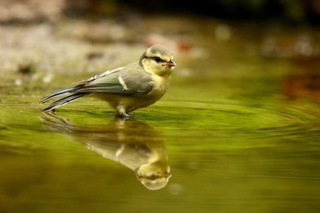 Leuke europese robin-vogel die overdag een meer overdenkt Gratis Foto