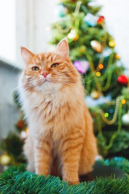 Leuke gemberkat en kerstboom. het pluizige grappige huisdier zit voor kerstmis verfraaide spar. Premium Foto