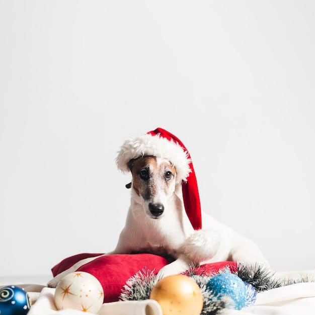 Leuke hefboom russel met kerstmisdecoratie Gratis Foto