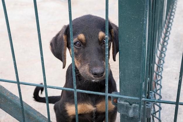 Leuke hond achter hek te wachten om te worden aangenomen Gratis Foto