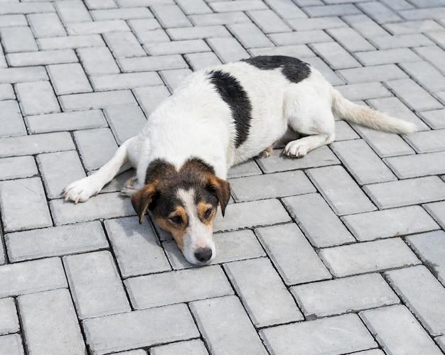 Leuke hond die buiten wacht om door iemand te worden geadopteerd Gratis Foto