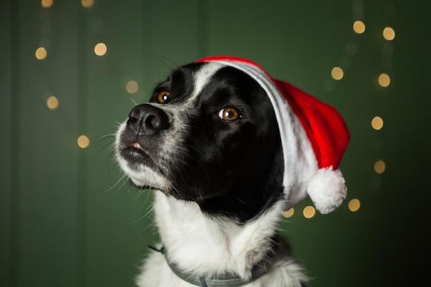 Leuke hond die de rode hoed van santa draagt Gratis Foto
