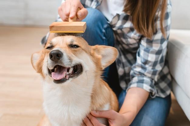 Leuke hond die door vrouw wordt geborsteld Premium Foto