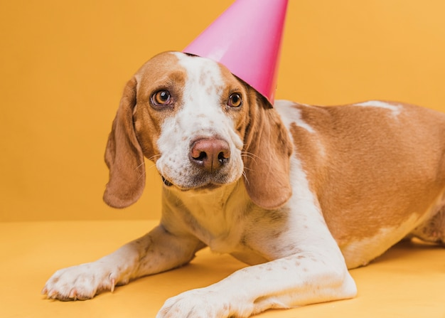 Leuke hond die een feesthoed draagt Gratis Foto