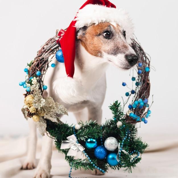 Leuke hond die hoed met kerstmisdecoratie draagt Gratis Foto