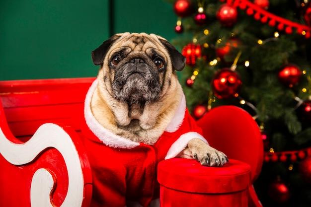 Leuke hond die santa op kerstmis helpt Gratis Foto