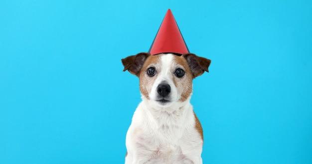 Leuke hond in rode feestmuts ontworpen Premium Foto