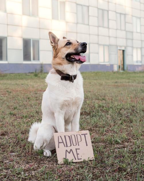 Leuke hond met adopteer me banner Gratis Foto