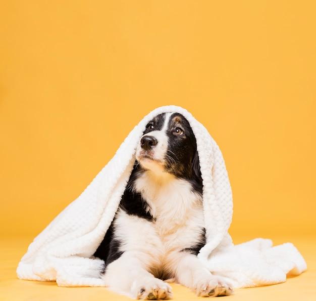 Leuke hond met een handdoek Premium Foto