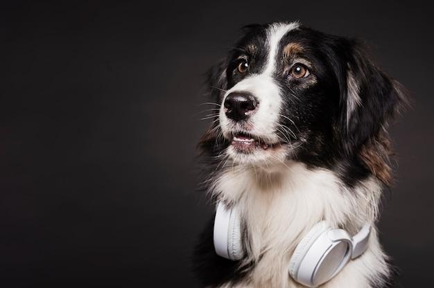 Leuke hond met koptelefoon Gratis Foto