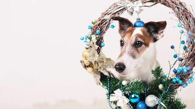 Leuke hond met xmas decoratie Gratis Foto