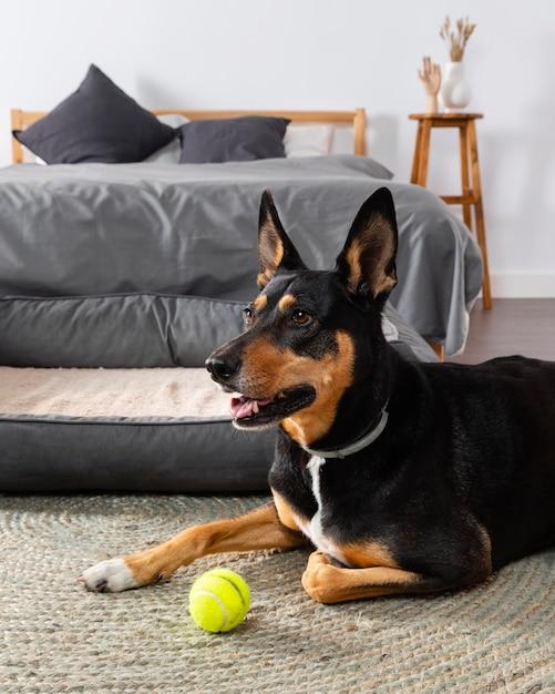 Leuke hond op vloer met bal | Gratis Foto