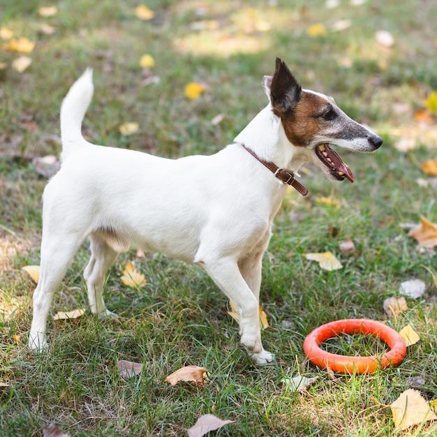 Leuke hond spelen in park | Gratis Foto