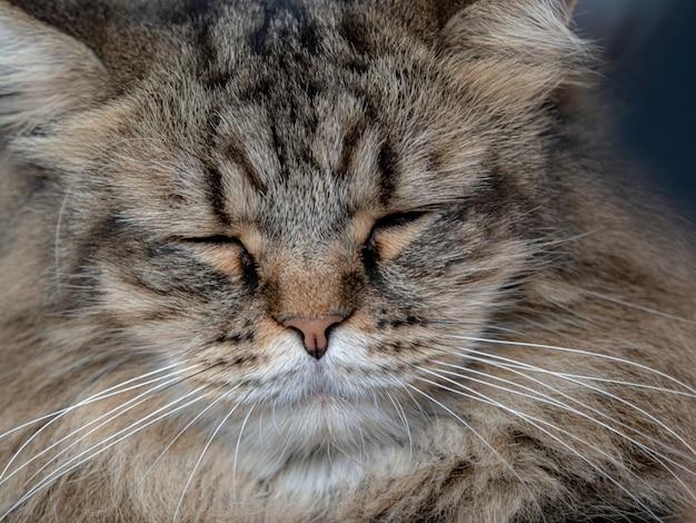 Leuke kat is sleeclose-up kat liggend op de vloer Premium Foto