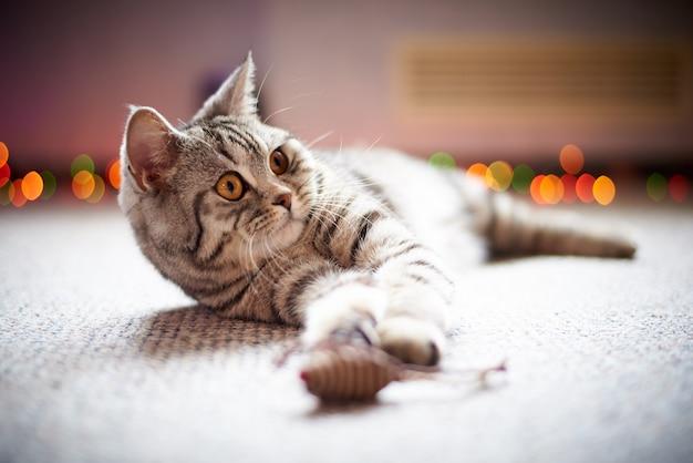 Leuke kat op de vloer op een vage achtergrond met bokeh. Premium Foto