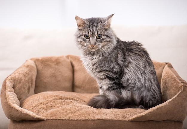 Leuke kat zit in zijn kattenbed. Premium Foto