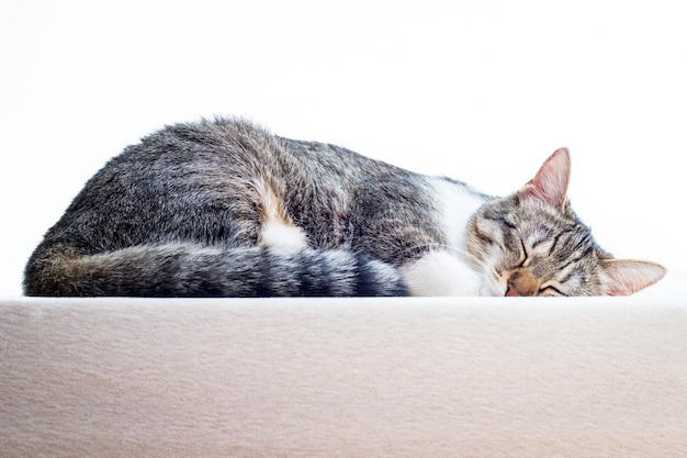 Leuke kittenslaap op matras thuis Premium Foto