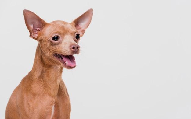 Leuke kleine hond met exemplaarruimte Gratis Foto