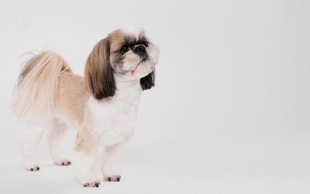 Leuke kleine hond staande Gratis Foto