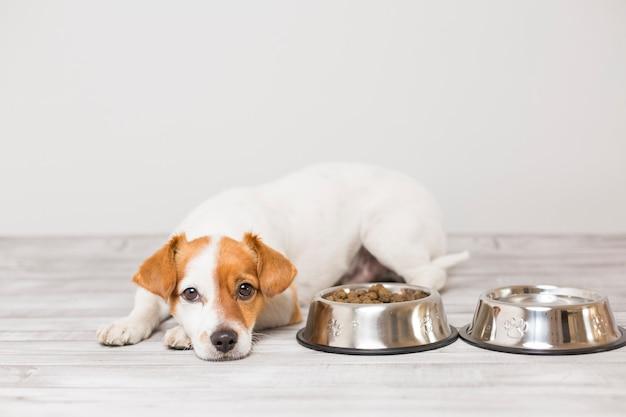 Leuke kleine hond zitten en wachten om zijn kom hondenvoer te eten Premium Foto
