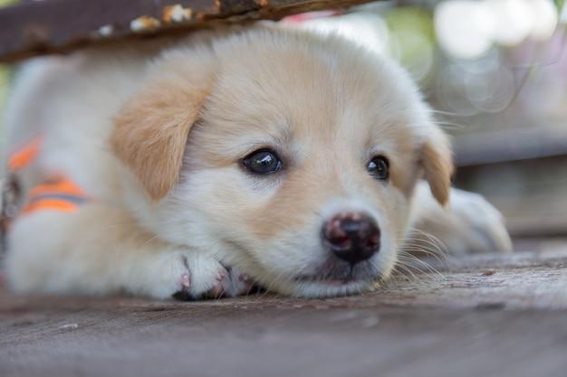 Leuke kleine puppy's zitten te hurken en zoeken naar spel op de vloer Premium Foto