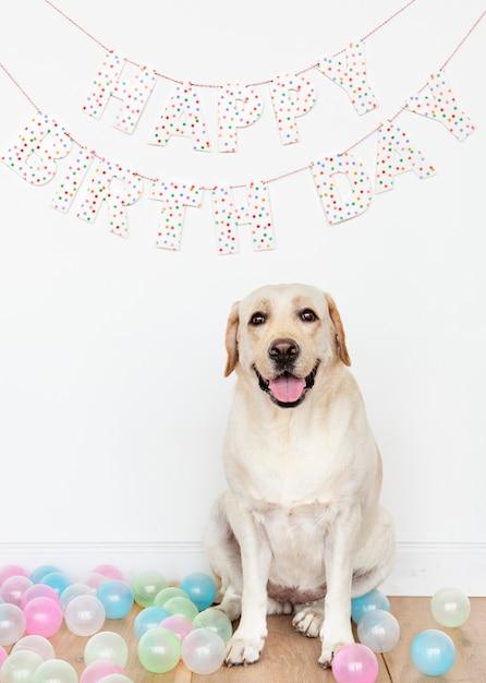 Leuke labrador bij een verjaardagspartij Gratis Foto