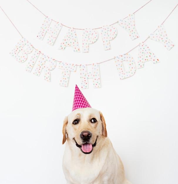 Leuke labrador met een feestmuts op een verjaardagsfeestje Gratis Foto