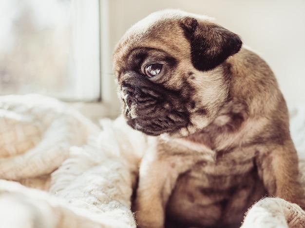 Leuke, lieve puppy zittend op een witte deken Premium Foto