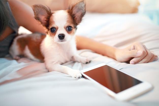 Leuke puppyhond met slimme telefoon Premium Foto