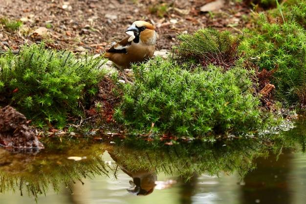 Leuke roodborstvogel dichtbij een meer Gratis Foto