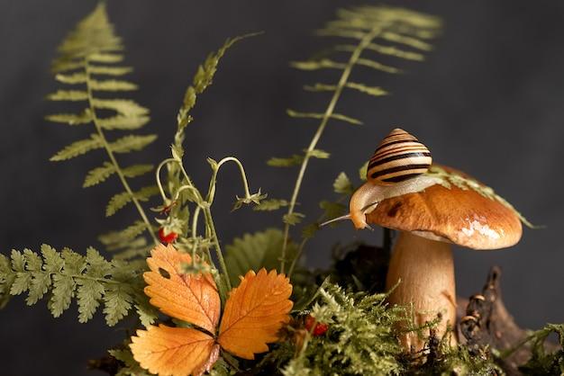 Leuke slak met gestreepte shell zit op de bovenkant van grote boletuspaddestoel die door mos en gevallen bladeren in het bos groeit Premium Foto