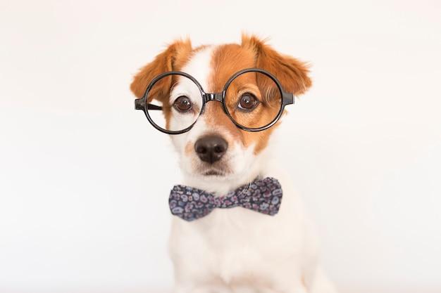 Leuke slimme hond met bowtie en glazen. | Premium Foto