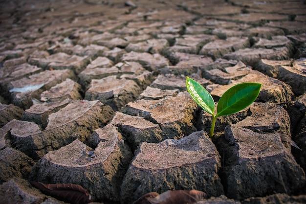 Leven met boom droogte, crack grond droogte. Premium Foto