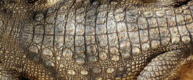 Levend krokodil echte huid macro textuur detail Premium Foto