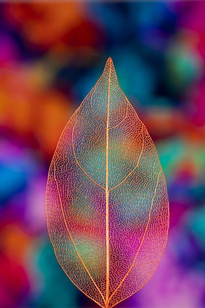Levendig gekleurd transparant herfstblad Gratis Foto